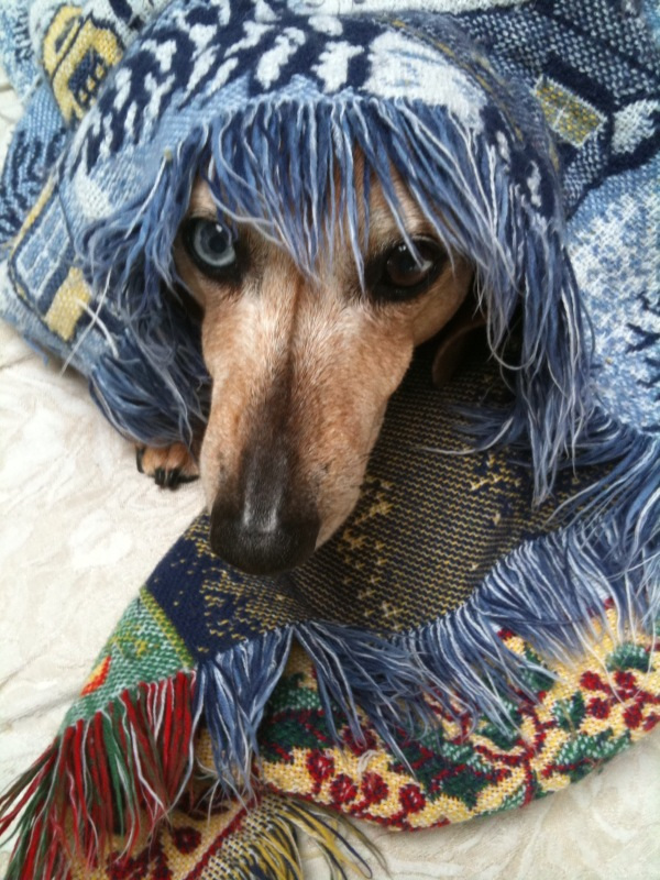 billy-under-blanket